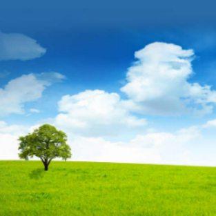 LendingTree Achieves 65% Lower CPAs With Taboola's Internal Retargeting